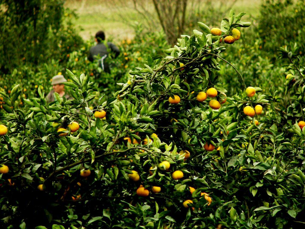 Regional Development & Climate Smart Agriculture