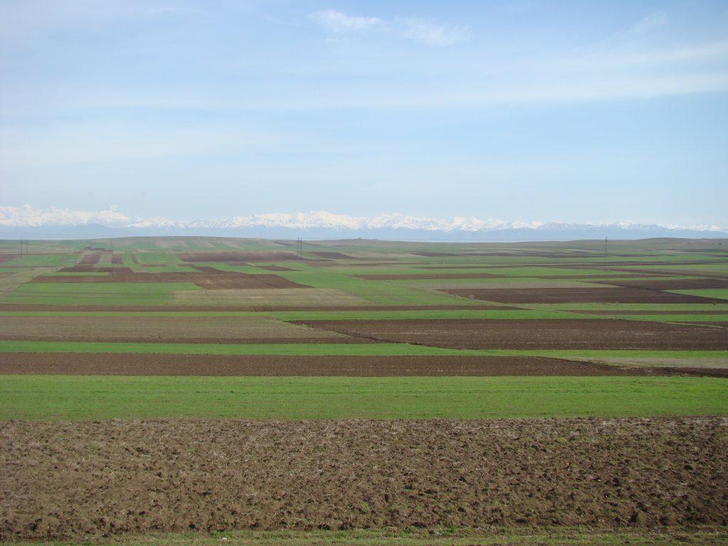 რეგიონული განვითარება  და კლიმატგონივრული სოფლის მეურნეობა