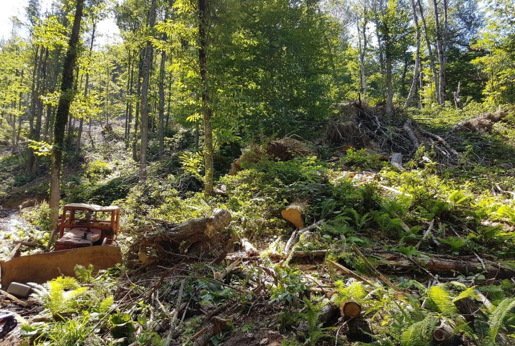 ანთროპოგენული ზეწოლა ტყეებზე, უკანონო ჭრა და ტყის დეგრადაცია ალის სატყეო უბანში